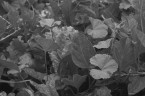 Black and white image of foliage growing in the yard.